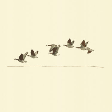 Illustration with watercolour and ink with the title 'Wild Geese'