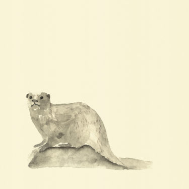 Illustration with watercolour and ink with the title 'Otter'.