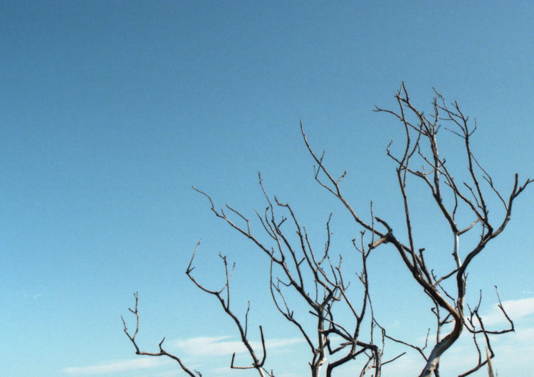 Bare twigs in front of a blue sky - analogue photography by Katrin Mainusch - friendmade.fm