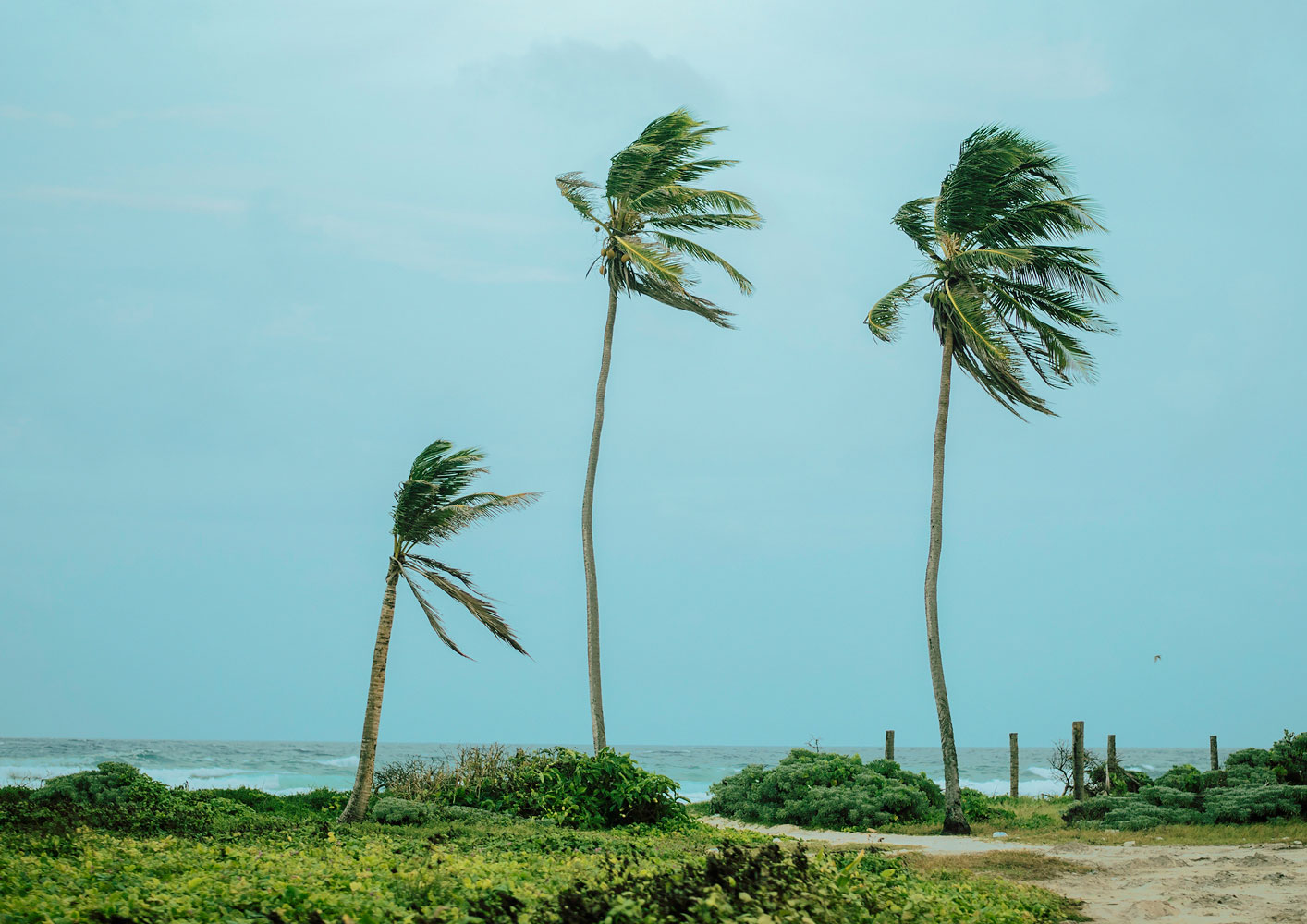 Landscape photography with the title 'Whispering of the Sea'. Palm trees by the ocean, bending in the wind - photogrpahed by jessica daza gomez - friendmade.fm